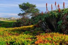 Pacific Grove (Ping & Wenji) Tags: pacificgrove california