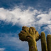 Saguaros and the Clouds