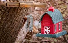Barn bird (mpalmer934) Tags: bird feeder winter january house sparrow red barn