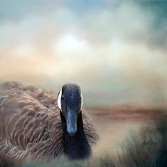 Canada Goose in Marsh... (Patlees) Tags: canadagoose textured dt 2020