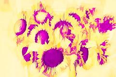Sunflower Delight - HSS! (JSB PHOTOGRAPHS) Tags: jsb0174studio sunflower delight sliderssunday hss topazstudio2 nikon d800 1735mm afs zoomnikkor f28d ifed ƒ71 240 mm