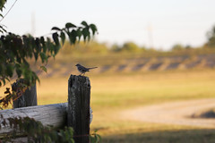 IMG_2267 (FrockPhotos) Tags: louisiana coastalbirds fortjackson