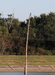 IMG_2256 (FrockPhotos) Tags: louisiana coastalbirds fortjackson