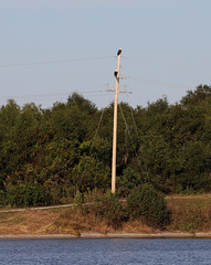 IMG_2252 (FrockPhotos) Tags: louisiana coastalbirds baldeagle fortjackson