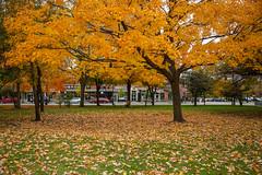Logan Square (silkylemur) Tags: green chicago illinois canon canon5dmarkiii midwest logansquare unitedstatesofamerica yellow autumn fall color colors colores
