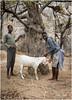 Slaughtering A Goat (RudyMareelPhotography) Tags: africa camp himba himbanamibia natgeotravel ondjongodance rudymareelphotography vanz vanzyls vanzylspass ngc travel travelphotography wanderlust