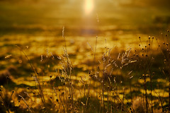 When you don't want the day to end (tonguedevil) Tags: landscape view outdoor outside countryside nature winter field grass colour light sunlight sunset