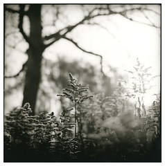 In the garden (Mark Dries) Tags: markguitarphoto markdries hasselblad500cm planar carlzeiss darkroomprint printmaking print rolleivintagepaper 332 rc warmtone zeeland oof