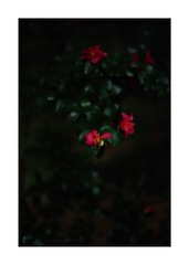 This work is 9/21 works taken on 2019/12/1 (shin ikegami) Tags: sony ilce7m2 a7ii sonycamera 50mm lomography lomoartlens newjupiter3 tokyo 単焦点 iso800 ndfilter light shadow 自然 nature naturephotography 玉ボケ bokeh depthoffield art artphotography japan earth asia portrait portraitphotography