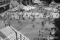 Tokyo - Shibuya - Shibuya Crossing (CATDvd) Tags: nikond7500 日本国 日本 stateofjapan nippon niponkoku nihonkoku nihon japón japó japan estatdeljapó estadodeljapón catdvd davidcomas httpwwwdavidcomasnet httpwwwflickrcomphotoscatdvd july2019 kantōregion kantōchihō regiódekantō regióndekantō 関東地方 tokio tōkyō tokyometropolis tōkyōto tòquio 東京 東京都 shibuya shibuyaku 渋谷区 architecture arquitectura building edifici edificio shibuyacrossing