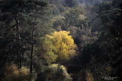 In the woods (Through_Urizen) Tags: bedfordshire category england flora places rushmere canon1585mm canon canon90d outdoor forest woodland trees colours colourful autumn autumnal valley countryside rural