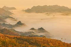 _MG_8815.0212.Tân Lập.Mộc Châu.Sơn La (hoanglongphoto) Tags: asia asian vietnam northvietnam northernvietnam northwestvietnam landscape scenery vietnamlandscape vietnamscenery mocchaulandscape nature naturelandscape sunrise clouds mountain flanksmountain vietnammountainouslandscape cloudsofmocchau canon canoneos5dmarkii canonef100400mmf4556lisusm tâybắc sơnla mộcchâu tânlập thiênnhiên thiênnhiênmộcchâu natureinmocchau bìnhminh bìnhminhmôcchâu mây mâymộcchâu núi sườnnúi phongcảnhvùngnúi topmountain dãynúi đỉnhnúi mâyluồnmộcchâu phongcảnhthiênnhiên thiênnhiênviệtnam hoanglongphoto