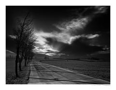 BÄUME (herbert thomas hesse) Tags: hth way trees sw monochrome bw strasse weg bäume eichsfeld sky clouds black white