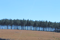 Trees on the Mountaintop (Rckr88) Tags: mpumalanga southafrica south africa trees mountaintop treesonthemountaintop tree mountains mountain cliff cliffs hill hills hillside nature naturalworld outdoors travel travelling