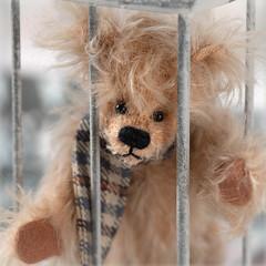 #FreeJason (hehaden) Tags: bear teddybear hardybears miniature scarf bars cage confined macromondays contained macro square