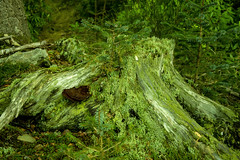 Photo of Tree stump