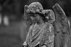 Contemplation of Eternity (Michael J Lawlor) Tags: windsor angel tombstone bw blackwhite blackandwhite monochrome berkshire cemetery