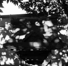 IMG_20200103_0008 (Dinasty_Oomae) Tags: ricohflexnewdia ricohflex リコーフレックスニューダイヤ リコーフレックス ricoh リコー 千葉県 千葉 chiba 船橋市 船橋 funabashi 白黒写真 白黒 monochrome blackandwhite blackwhite bw outdoor 神社 shrine