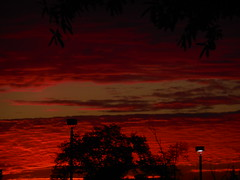 DSCN0372 (tombrewster6154) Tags: stunning beautiful gorgeous pretty fiery colors hues sunrise morning picture late april 2019 mmxix greensboro northcarolina midspring lovely view outside natural beauty silhouettes trees leaves street lights lit branches parking lot