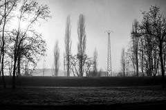 Lignes (Clydomatic) Tags: paysage arbres lignes verticales brume pylône ligneélectrique