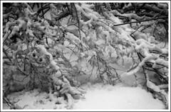 Winter forest / Зимний лес (dmilokt) Tags: природа nature пейзаж landscape зима winter лес forest dmilokt