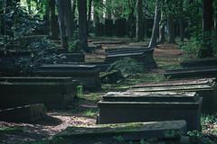 Graves (michael_hamburg69) Tags: hamburg germany deutschland cemetery friedhof ohlsdorf jüdischerfriedhof jüdischerfriedhofilandkoppel ohlsdorfjewishcemetery jewishcemetery beech buche buchen trees bäume graves grab tombstone