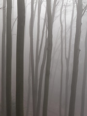 Graphic mist ((Oden) WALD-Fotograf) Tags: tree forest wald baum nebel mist fog