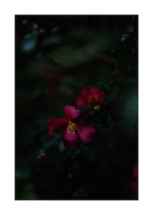 This work is 12/21 works taken on 2019/12/1 (shin ikegami) Tags: sony ilce7m2 a7ii sonycamera 50mm lomography lomoartlens newjupiter3 tokyo 単焦点 iso800 ndfilter light shadow 自然 nature naturephotography 玉ボケ bokeh depthoffield art artphotography japan earth asia portrait portraitphotography