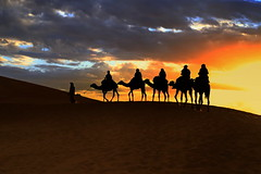 At sunset in the desert (annalisabianchetti) Tags: deserto desert camel silhouette sunset tramonto morocco marocco africa beautiful paesaggio landscape