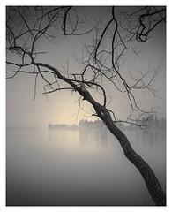 Obliqueness (Vesa Pihanurmi) Tags: landscape lake reflection tree nature monochrome finland branches trunk tuusulanjärvi waterscape