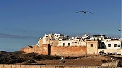 Blick auf die Altstadt von Essaouira (marionkaminski) Tags: marokko morokko maroc essaouira hafenstadt port hafen atlantik stadt ville town stadtmauer ocean atlantischerozean afrika nordafrika marruecos
