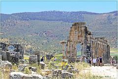 Ruines de la basilique romaine6/6 (philippedaniele) Tags: maroc volubilis capitole vestigesromains vestigesromainsbasilique romaine