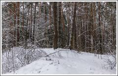 Winter forest / Зимний лес (dmilokt) Tags: природа nature пейзаж landscape зима winter лес forest dmilokt ins