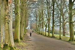 Tree-Lined Avenue (Bri_J) Tags: chatsworthhousegardens edensor derbyshire uk chatsworthhouse chatsworth gardens statelyhome winter nikon d7500 trees path avenue hdr
