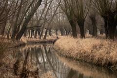Zima (Fotagi) Tags: landscape winter trees river nature poland podkarpacie asceza drzewa wierzby natura przyroda krajobraz rzeka woda breń polska
