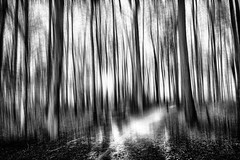 Running in the Woods... (Ody on the mount) Tags: abstrakt blackwhite bäume de em5iii hdr kunst licht mzuiko124028 omd olympus pflanzen wald abstract art bw blackandwhite fineart forest icm light monochrome photoshop sw schwarzweis trees woods