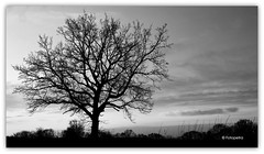 mono Tree (petra.foto busy busy busy) Tags: mono monocrom schwarzweis tree baum natur landschaft fotopetra canon eosrp