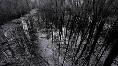 Prévoir des bottes (Un jour en France) Tags: reflet monochrome arbre noiretblanc noiretblancfrance canoneos6dmarkii canonef1635mmf28liiusm black