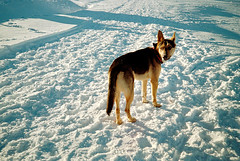 Untitled (21) (mzpckpvo47) Tags: film kodak gold gold200 snow winter dog olympus af1mini c41 fuji xpress