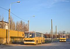 Ikarus 280 - 2182 + 2175 - 104 - 18.12.2019 (2) (VictorSZi) Tags: romania muntenia bus autobuz ikarus ploiesti tce transport publictransport nikon nikond5300 winter iarna december decembrie