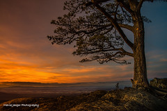The Sentinel... (jaegemt1) Tags: ravensroost thesentinel trees tree sunset valley landscape landscapephotography mariajaegerphotography jaegemt1 peaceful blueridgeparkway outdoors hiking overlook inspiration winter