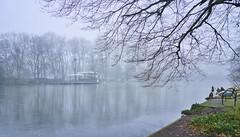Nebel am Stadtgartensee (KaAuenwasser) Tags: stadtgarten stadtgartensee see seebühne bühne wasser eis eisschicht nebel kalt kälte frost landschaft spiegelung baum bäume platanenallee weis luft garten park eindrücke eindruck winterlich winter januar 2020