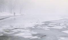 blanc (cébé céline) Tags: neige glace brume matin montroyal montréal hiver saison promeneur arbres banc parc réflexion branches lac reflection snow ice mist morning montreal winter season walker trees bench lake