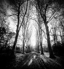 """take the forest path into the light as the winter shadows close in. Bois du Breuil (Forest of Breuil) near Honfleur, Calvados, Normandie (Normandy), France. (grumpybaldprof) Tags: """"canon70d"""" """"sigma1020mmf456dchsm"""" """"wideangle"""" ultrawide bw blackwhite """"blackwhite"""" """"blackandwhite"""" noireetblanc monochrome """"fineart"""" ethereal striking artistic interpretation impressionist stylistic style contrast shadow bright dark black white illuminated mood moody atmosphere atmospheric landscape scenery vista trees wood forest branches leaves """"boisdubreuil"""" """"forestofbreuil"""" honfleur normandy normandie calvados france vasouy penndepie conservation """"conservatoiredulittoral"""" rhododendrons """"coastalconservancy"""" bois deciduous coniferous woods coastline """"dukesofnormandy"""" french kings """"philippeauguste"""" breuil wildlife wildboar """"pinemarten"""" """"redfox"""" deer """"forestwalk"""" shapes patterns path walk track"""