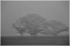 Por Australia (-Ana Lía-) Tags: monocromático bw bn flickr nikon luz oración energía paz resurrección naturaleza árboles vida analialarroude imagen esperanza recuerdos fauna flora personas mínimo minimalista tres continenteaustraliano