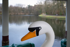 Swan (Bephep2010) Tags: 2019 35mmf14dghsmart 7markiii aachen alpha deutschland germany hangeweiher ilce7m3 nrw northrhinewestphalia schwan sigma sony weiher winter pond swan ⍺7iii