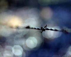 Into the Sharp (bitzcelt) Tags: barbedwire fence bokeh bitzcelt nikkor50mmf14 light rural rusty sharp nikon