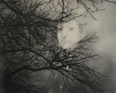 ❤ (juliarholcomb) Tags: film instantfilm polaroid polaroidspectra portrait doubleexposure chicago spectra bw expiredfilm