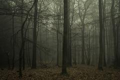 Rusty Forest (Netsrak) Tags: baum bäume eu europa europe forst januar january landschaft natur nebel wald fog forest landscape mist nature tree trees winter woods rheinbach nordrheinwestfalen deutschland