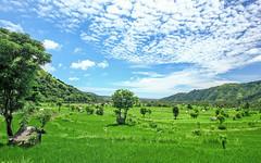 Bali rice fields landscape